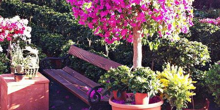mondo verde hortikultura